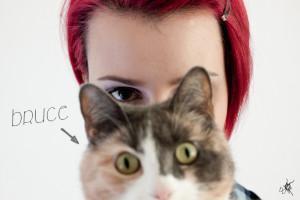 Das Phänomen Beautyblog & Katze