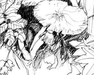 Peter Handke: Versuch über den Pilznarren