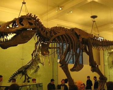 Fossilien-Tag in den USA – National Fossil Day