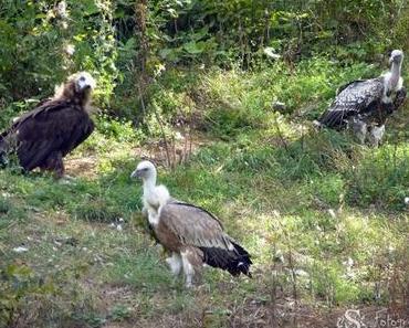 Unter Geiern und Wölfen im Tierpark Bad Mergentheim