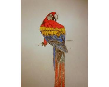 Zeichentutorial: Wie zeichnet man einen Papagei?