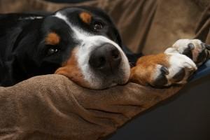 Hunde und Senioren – eine glückliche Lebensgemeinschaft!?