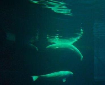 Chicago – Shedd Aquarium