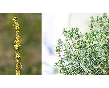 Heilpflanzen bei Husten