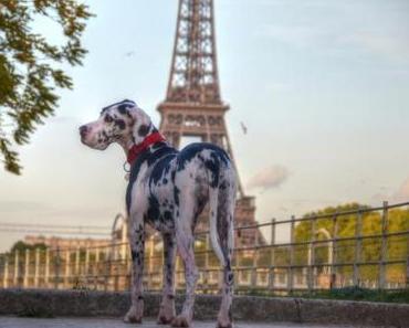 Mit Hund nach Paris – schwierig, aber nicht unmöglich
