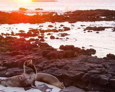 Mein Traumabenteuer auf den Galapagos: Die coolsten Highlights!