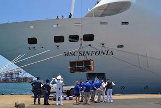 MSC Kreuzfahrten hilft jungen gestrandeten See- Elefanten nach Hause zu bringen!