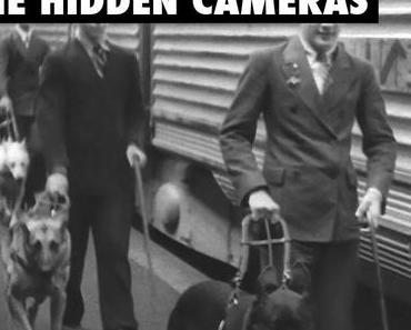 The Hidden Cameras: Rückblende