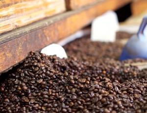 Kaffeepulver als nachhaltiger Dünger