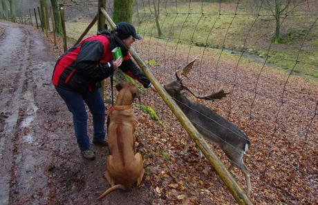 Wild im Regen und nasse Hunde im Odenwald