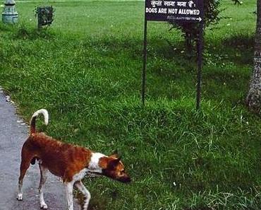 Dogs are not allowed in Calcutta