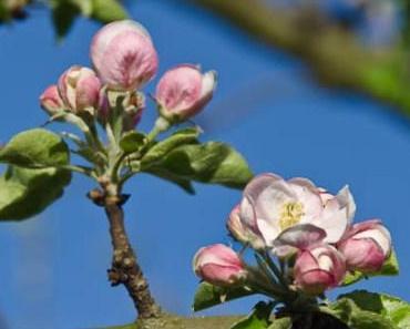 Hanging Basket-Salatsieb im Apfelbaum…. ich bräuchte da mal eine Idee!