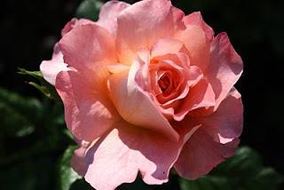 Wir brauchen einen neuen Frühling, einen Frühling des Herzens!