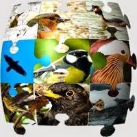 Ornithopedia (für Android)