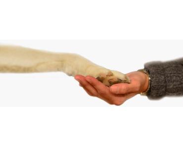 Zur Orientierung des Hundes auf den Menschen
