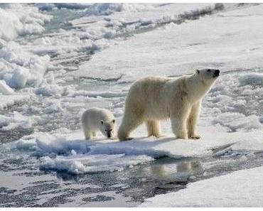 Mit dem Kreuzfahrtschiff zu seltenen Tieren in freier Wildbahn