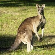 """Arbeiten und studieren in """"downunder"""" Australien: Ob im Urlaub oder länger. Wie geht das ?"""
