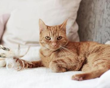 Meine 5 Tipps für mehr Katzen-Sicherheit in der Wohnung