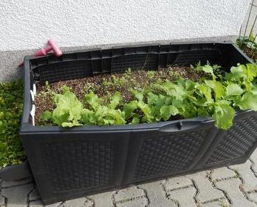 Balkon/Garten - die Erste 2014