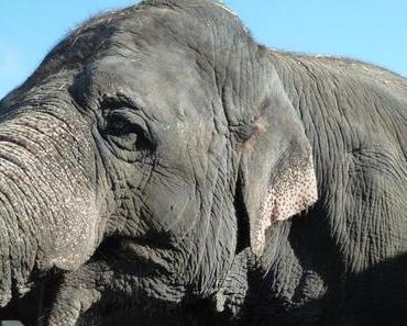 Glücklich durch den Sommer: Happy Elephants von herz&stern