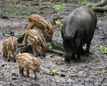 Irren durch die märchenhafte Welt des U Minh Urwaldes (Teil 2)