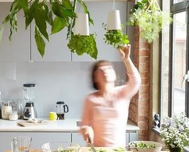 mir gefallen diese hängenden pflanzen eifach super! und g...