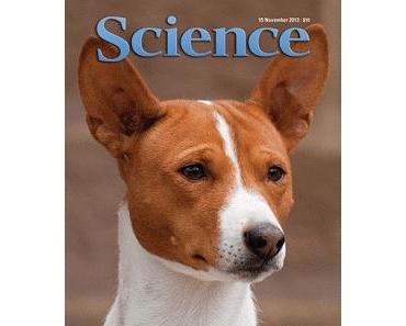 Evolution - Halfen uns Hund und Neandertaler? (2)