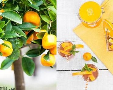Gesunden Eistee selber machen mit Zitrus-Früchtetee