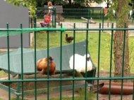 Hühner mit Matte