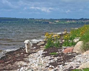 Reif für die Insel – mit dem Hund auf Fanö urlauben
