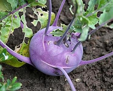 Our Beautiful World * Vegetables