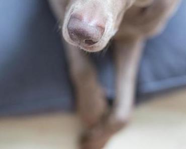 Paulas neues Hundebett ♥ Miacara