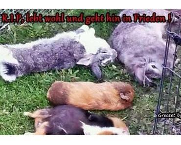 Zeugen gesucht nach grausamen Tiermord ! 3 Kaninchen und 4 Meerschweinchen das Genick gebrochen.