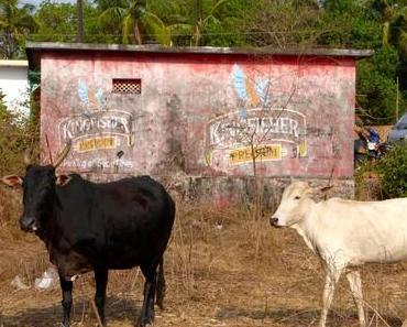 Indien – eine Million Götter, Kühe und Hippies