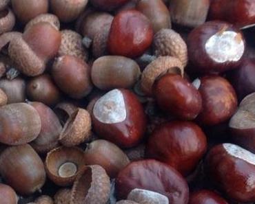 Herbstfrüchten einen Rahmen geben – oder – Das können schon die Kleinsten: Suchen, Sammeln, Sandb ilder