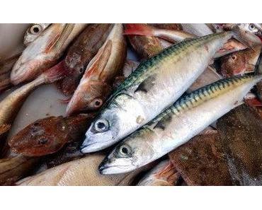 Marokko: viele Fische und auch im Muger