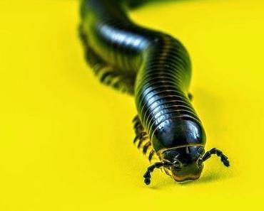 Zum Kotzen: Nach Sushi-Verzehr tausende Bandwürmer im Körper. Guten Appetit ! Glauben Sie nicht ?