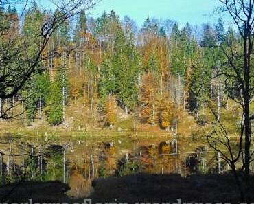 November-Ausflug zum Nonnenmattweiher – mit Vesper in der Fischerhütte