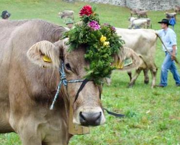 Das traditionelle Prättigauer Alp Spektakel