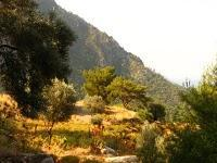 Along the Lycian Trail