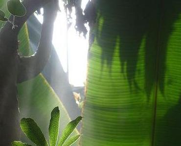 Dschungelcamp 2011 – Peer wird zum Dschungelkönig gewählt