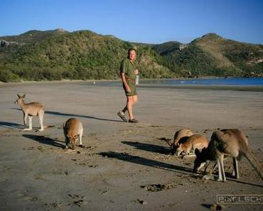 Einfache Tipps für schöne Porträt-Fotos mit Kängurus
