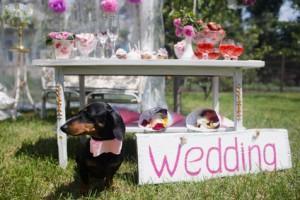 Kurioses rund um die Hochzeit, Teil 1