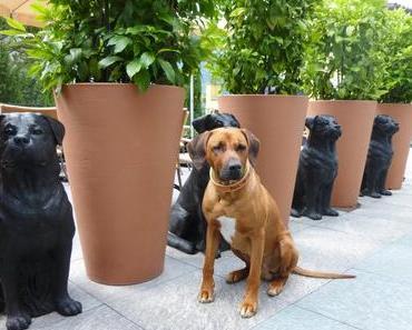 Hund im Hotel – 12 Tipps für ein gutes Miteinander