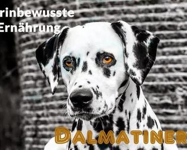 Purinbewusste Ernährung Dalmatiner