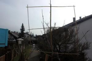 So (er)zieht man sich einen Spalierbaum für den Balkon