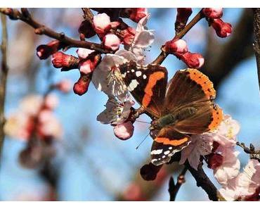 Frühling am Comer See