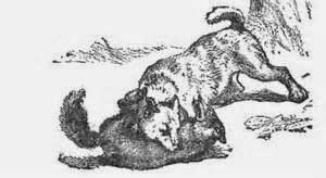 Hund und Fuchs - Streit um die Wurst - Fabel aus Korea