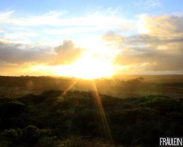 Cherry Lamingtons | Ein kurzer Trip ans andere Ende der Welt!