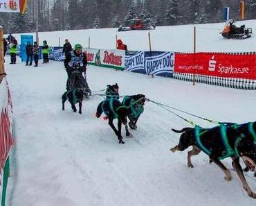 Schlittenhunderennen Weltmeisterschaft 2015 in Todtmoos im Schwarzwald